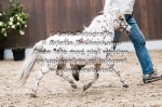 44. Brave Heart of the Fairy Tale Ranch-7