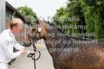 2021-07-23, Stamboekopnames en veulenkeuring, Nijbroek